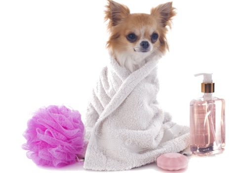 kisspng-dog-grooming-pet-sitting-cat-groom-5ad2aec9020c57.9702700515237567450084