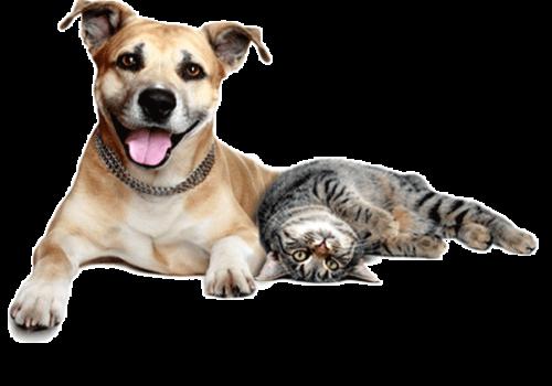 kisspng-dogcat-relationship-pet-sitting-dogcat-relat-dogs-and-cats-5b0db37ecb4c33.7050052915276245748327